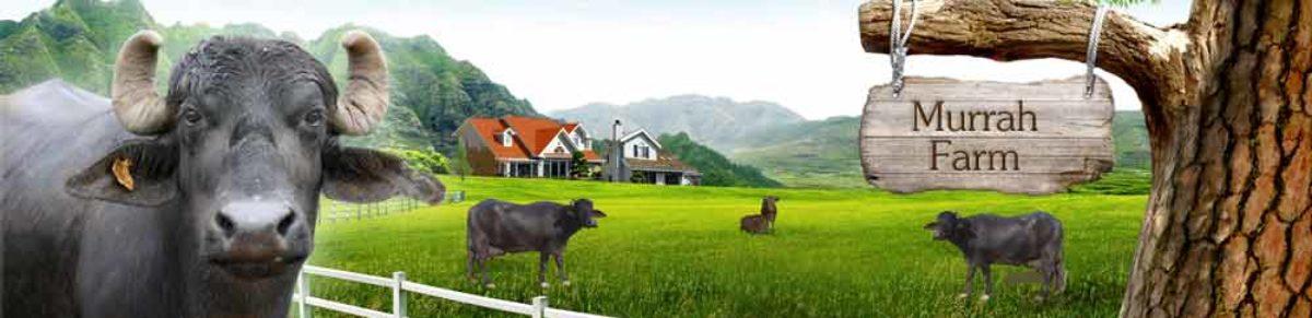 Bharathi Dairy Farm